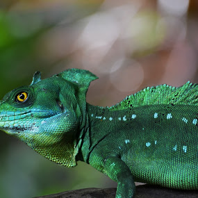 Reptile by Sankar GM - Animals Reptiles ( zoo, green, reptile, singapore,  )