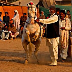 Horse Dance by Bob Khan - News & Events World Events (  )