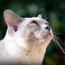 Mathilda by Caroline Beaumont - Animals - Cats Portraits ( mathilda,  )