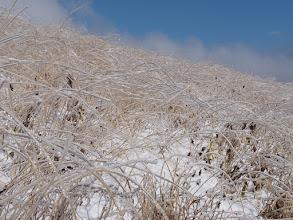 Photo: ススキの雨氷