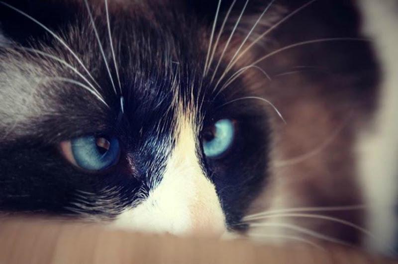 o..o..o..occhi di gatto! di lolscava