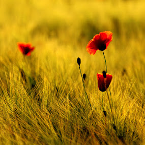 by Mihaila Cristian - Landscapes Prairies, Meadows & Fields ( pwcsummer )