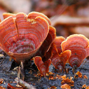 by Cecilia Sterling - Nature Up Close Mushrooms & Fungi (  )