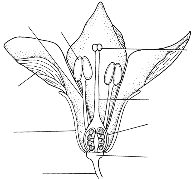 Reproduction In A Flowering Plant Sexual Reproduction In Flowering