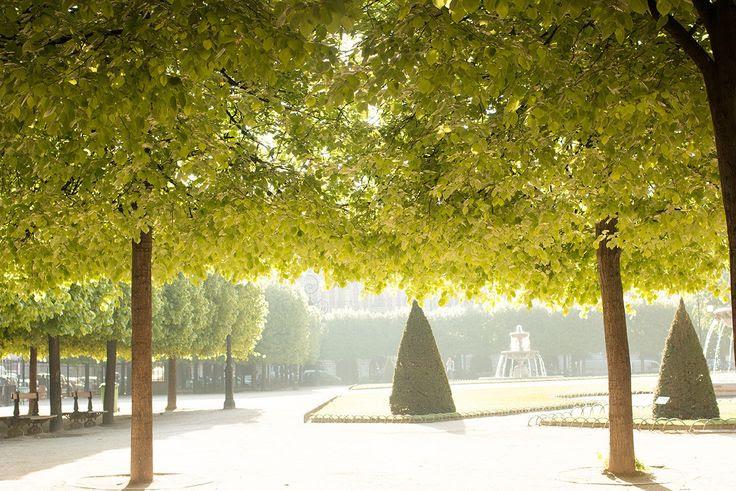 Париж летом. Куда лучше поехать летом во Франции, что посмотреть летом во Франции. Во Францию летом - куда лучше отправиться. Лавандовые поля Прованса, фестивали, пляжи