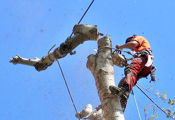 L'albero abbattutto di Luciano Fontebasso