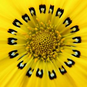 by Theodoros Theodorou - Flowers Single Flower (  )