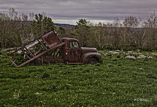 Photo: Out to Pasture