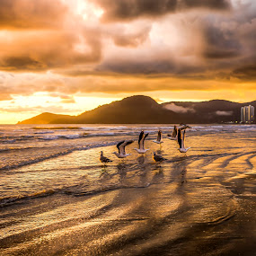 Sunrise with birds by Rqserra Henrique - Landscapes Sunsets & Sunrises ( clouds, brazil, rqserra, veach, colorfull, sunrise, birds, golden )