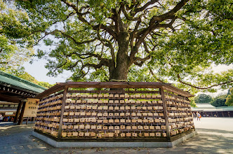Photo: Wooden ema (votive plaques) encircling a large oak tree at the Meiji Shrine in Tokyo, Japan