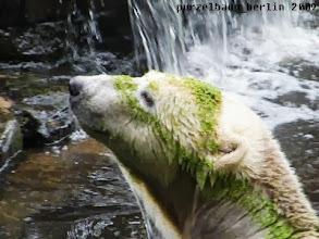 Photo: Zwischendurch muss Knut nach Gianna schauen ;-)