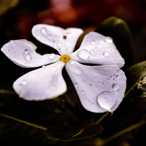 Water Drop by Deependra Bapna - Nature Up Close Flowers - 2011-2013 ( color, drop, white )