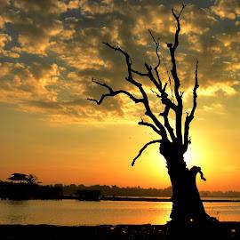 Dead Tree by Aung Kyaw Soe - Landscapes Sunsets & Sunrises (  )