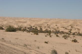 Photo: So stellt man sich Wüste vor!