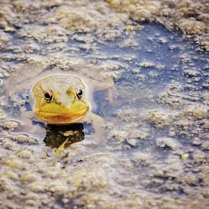 Froggy2.jpg