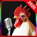 Chicken Song icon