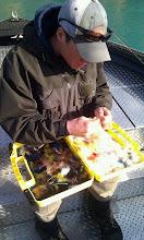 Photo: Nigel Fox of Alaska Drift Away Fishing choosing some trout candy.