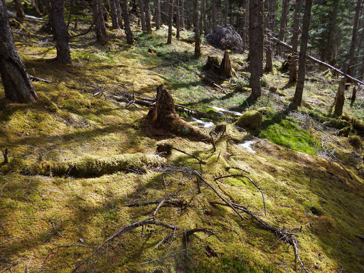 陽を浴びる苔の絨毯