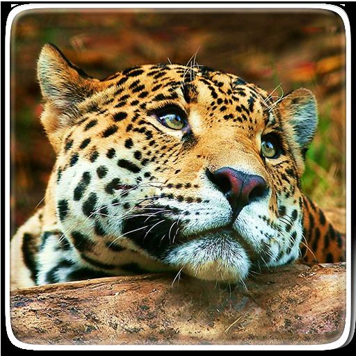 動物動態壁紙 個人化 App LOGO-APP試玩
