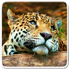 Animals Live Wallpaper 17872 icon