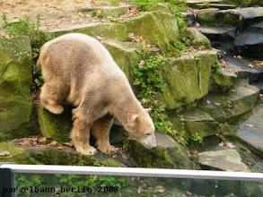 Photo: Knut unternimmt einen weiteren Ausflug zum Wassergraben ;-)