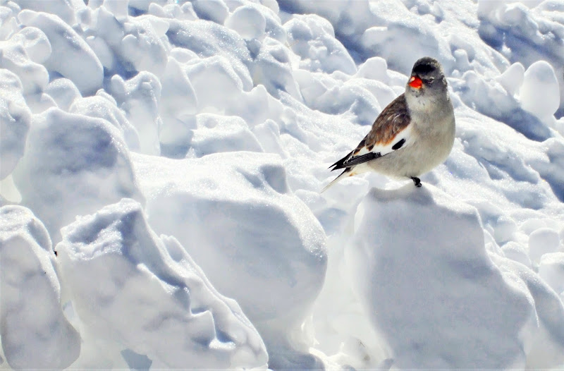 Zampette nella neve di MaxFelice