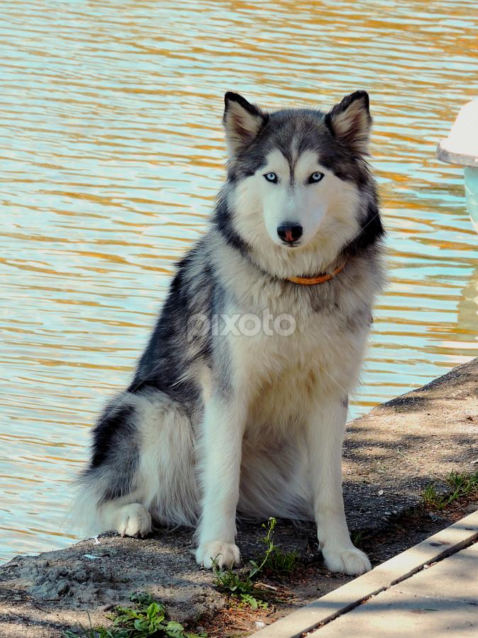 by Biljana Nikolic - Animals - Dogs Portraits (  )