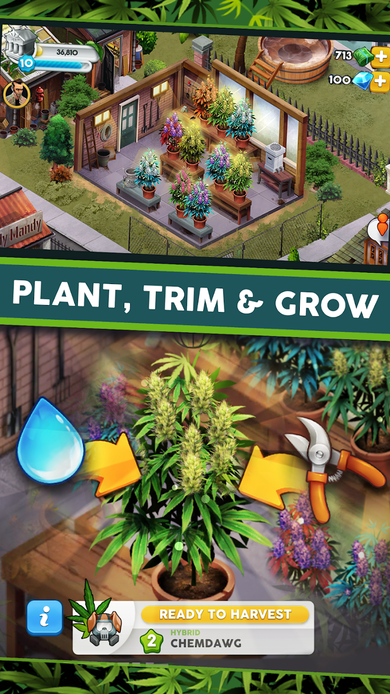 Hempire - Plant Growing Game Screenshot 3