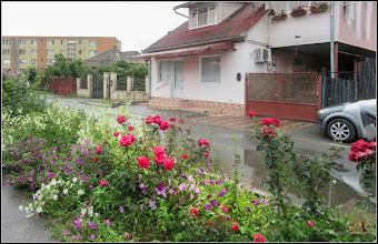 Photo: Turda - Str. Trandafirilor  - 2018.07.08