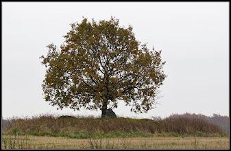 Photo: 30. oktober 2011 - Træet
