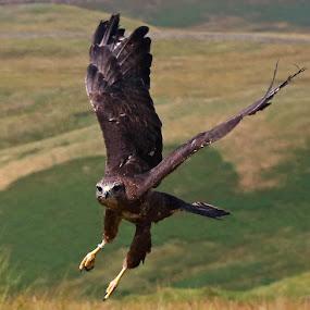On the way past by Wilson Beckett - Animals Birds (  )