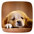 Cute Doggy Theme v 1.0.0