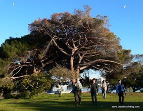 Photo: Birding the urban habitats at Lake Merritt, Oakland.