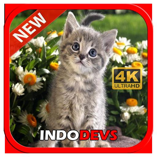 3d Cute Cat Live Wallpaper Apk Download Apkpure Co