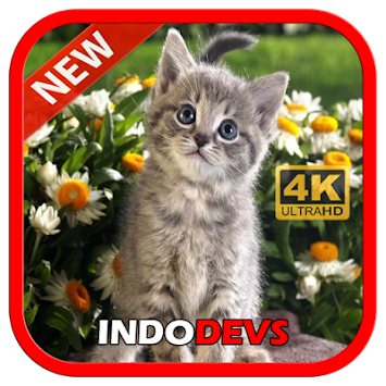 Download 3d Cute Cat Live Wallpaper By Indodevs Apk Latest Version