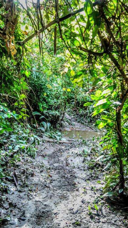 wetlands Parque Nacional de Manu