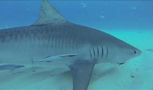 生命鯊魚(ONLINE CAM)