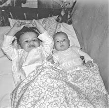 Photo: August 1959: Zwei Blätter eines Glückskleezweigs im Wohnzimmer. Foto: Wilhelm Rothe junior.