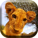 Little Lion Cub Live Wallpaper icon