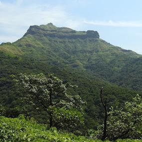 TORNA Fort  by Vivek Naik - Landscapes Mountains & Hills ( torna fort )