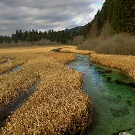 Zelenci by Bojan K - Landscapes Waterscapes ( zelenci, source, sava, lake,  )