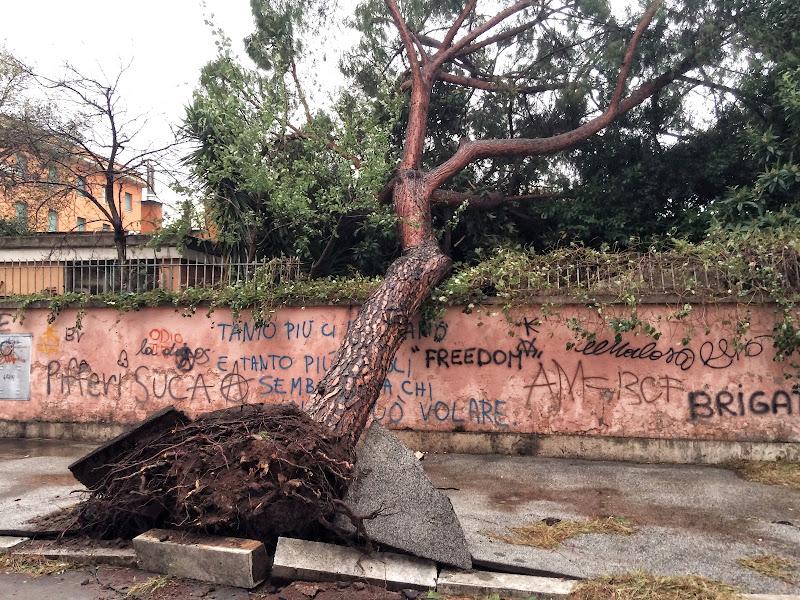 La resa di un albero di GVatterioni