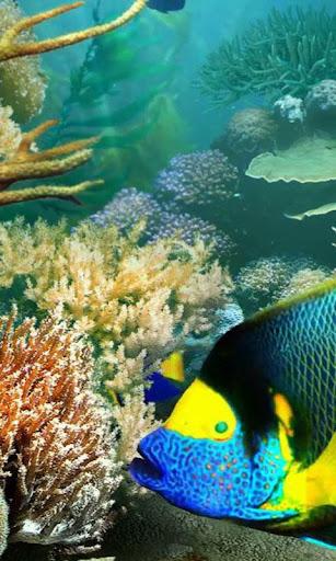 熱帯魚のライブ壁紙