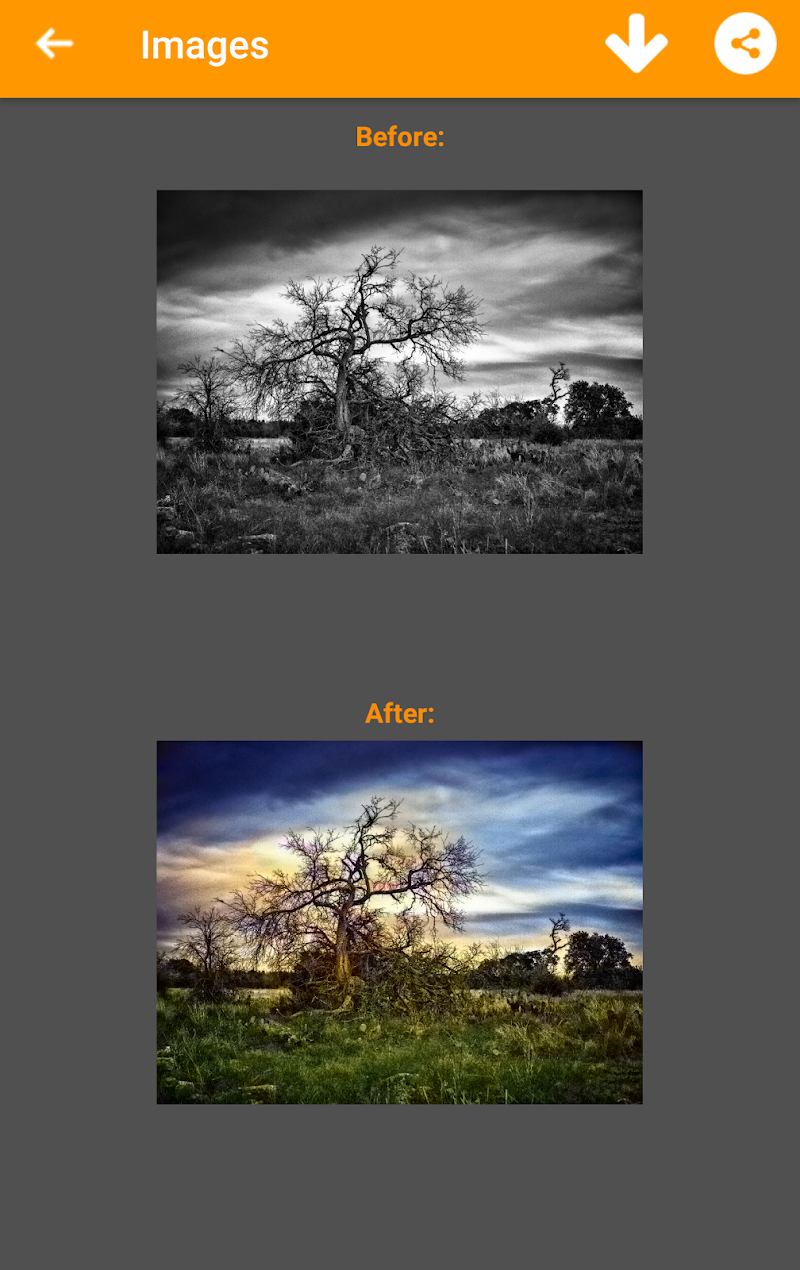 Black and White Photo Colorizer - Chromatix Screenshot 6