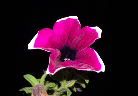 Flower in darkness di deepfish