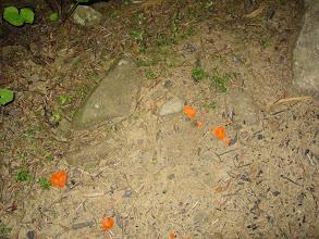 Photo: No i przez te grzybki ... ale Basia takich nie zbiera.