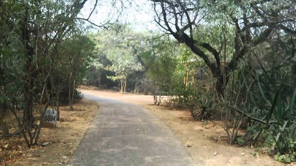 jahanpana-forest-best-running-tracks-delhi_image