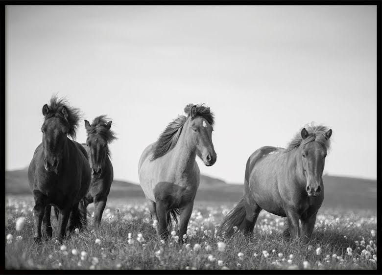 Horses, Poster