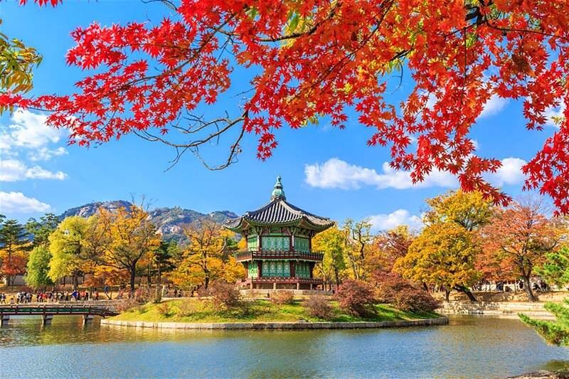 tour-Han-Quoc-mua-la-do-cung-dien-gyeongbuk.jpg