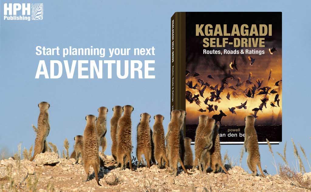 Kgalagadi Self-drive Reprint